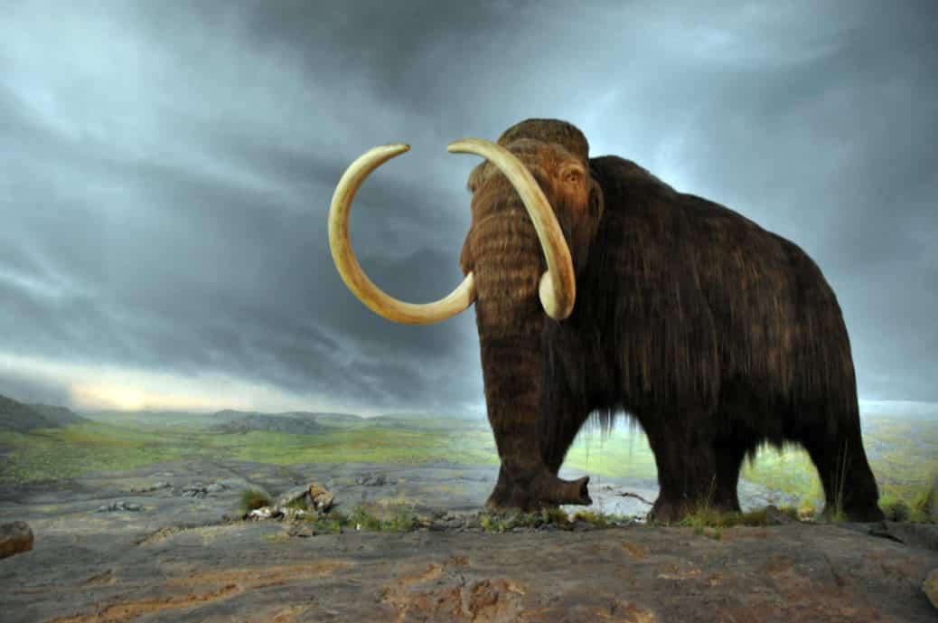 Mammoth Elephant